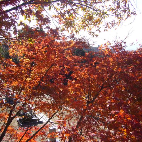 住吉霊園の秋